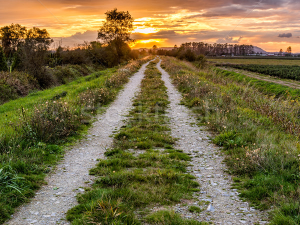 Dirt Road Path Leading to Sunset Stock photo © jameswheeler