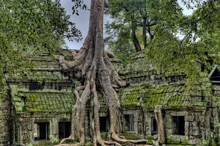 Tree Growing out of Angkor Wat Temple Stock photo © jameswheeler