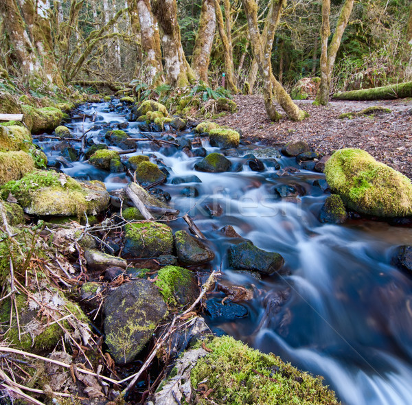 Flowing Stream With Mossy Rocks Stock photo © jameswheeler