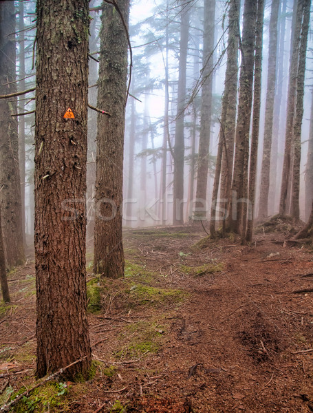 Foggy Forest Hiking Trail Marker Stock photo © jameswheeler