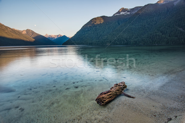 Log in a clear turquoise lake Stock photo © jameswheeler