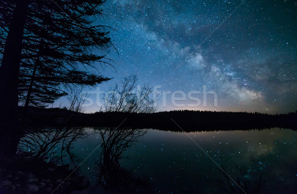Arbres laiteux façon arbre nature fond Photo stock © jameswheeler