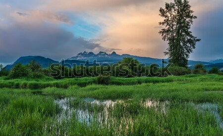 Wide Angle of Marsh in Foreground and Background mountains Stock photo © jameswheeler