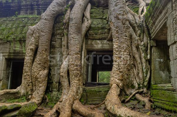 Stock photo: Tree Roots Around Window