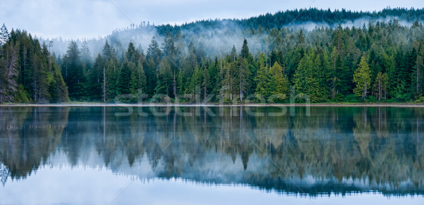 Perfect Reflection of Misty Forest in Lake Stock photo © jameswheeler