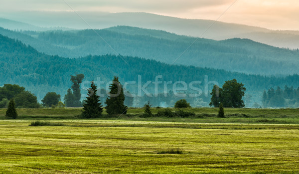 Layers of Green Mountain Trees Stock photo © jameswheeler