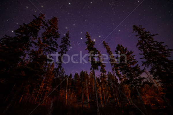 Tops of Evergreen Trees at Night With Stars Stock photo © jameswheeler