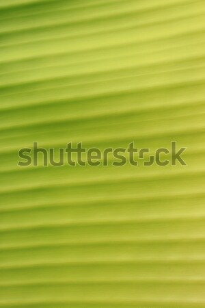 Yaprak yeşil yaprak doku bahar doğa Stok fotoğraf © janaka