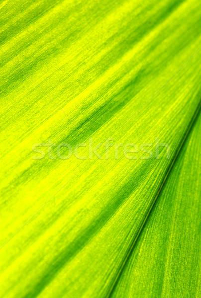 Green leaf Stock photo © janaka