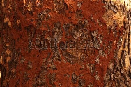 Tree trunk texture Stock photo © janaka