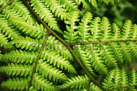 Folha verde natureza floresta jardim verde Foto stock © janaka