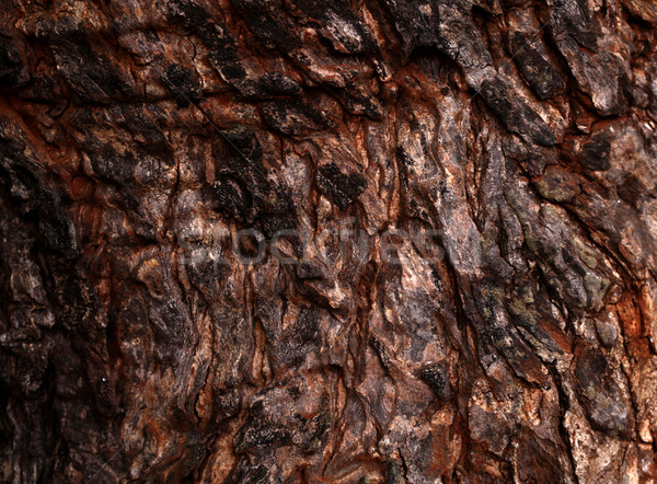 Tree trunk texture Stock photo © janaka
