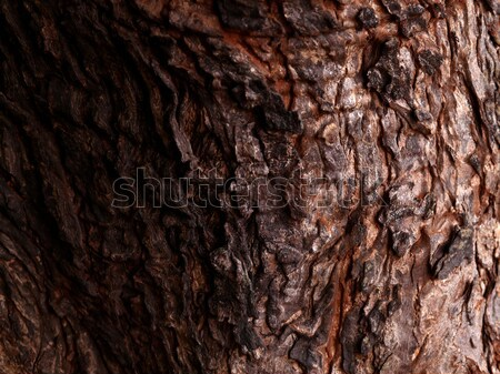 Boomstam textuur boom hout abstract Stockfoto © janaka