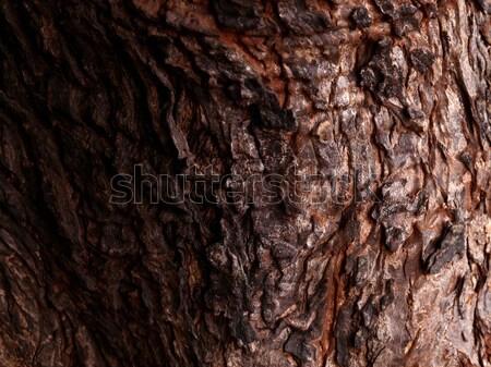 Doku ağaç ahşap soyut Stok fotoğraf © janaka