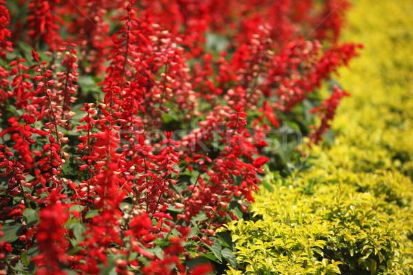 Flower Stock photo © janaka
