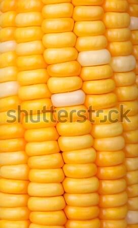 кукурузы семян макроса выстрел лист Сток-фото © janaka