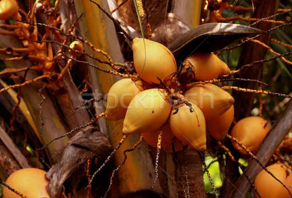Coconut Tree Stock photo © janaka