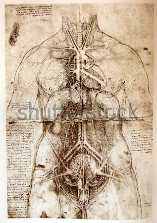 Anatomy art Stock photo © janaka