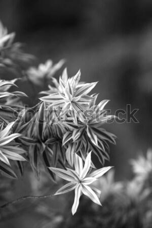 Groen blad natuur textuur voorjaar groene Stockfoto © janaka