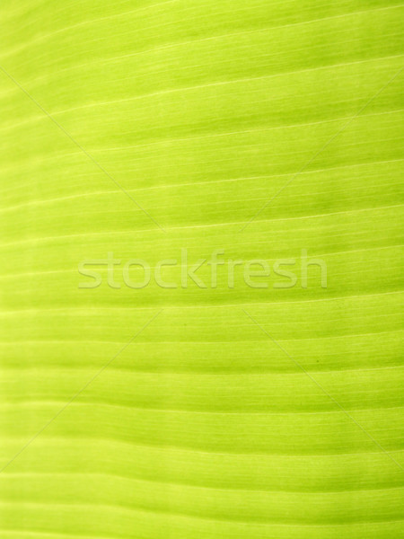 Green leaf  Stock photo © janaka