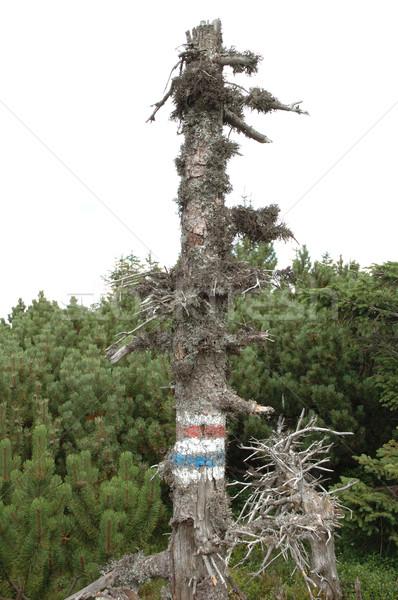 Sentier signes arbre montagnes Pologne République tchèque Photo stock © janhetman