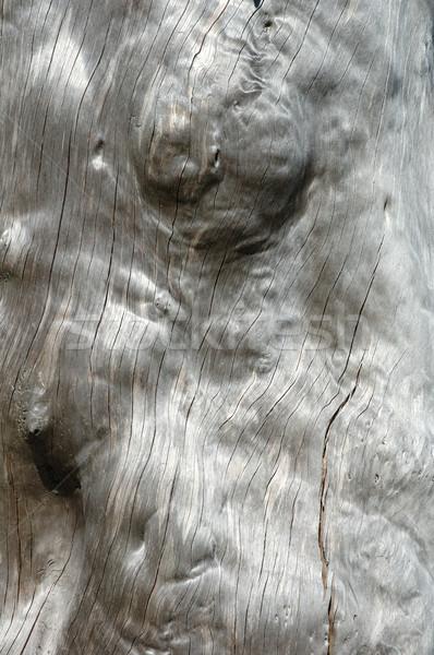 Arbre vieux bois fond morts blanche Photo stock © janhetman