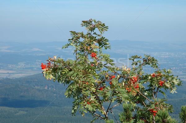 Photo stock: Branche · montagnes · Pologne · nature · vert · rouge