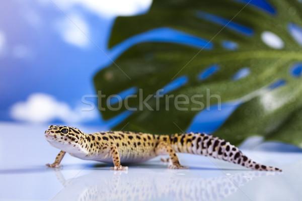 Lizard Stock photo © JanPietruszka