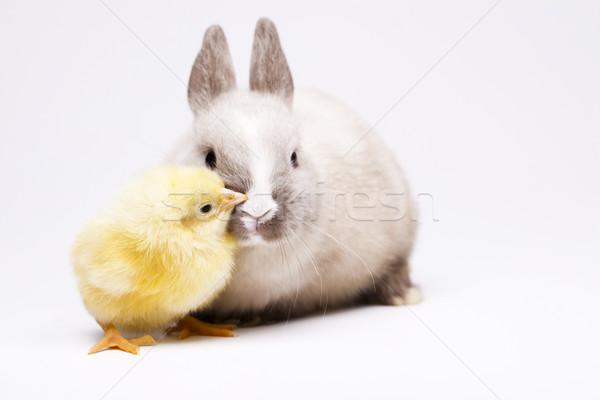 Csirke nyuszi húsvét baba madár tyúk Stock fotó © JanPietruszka