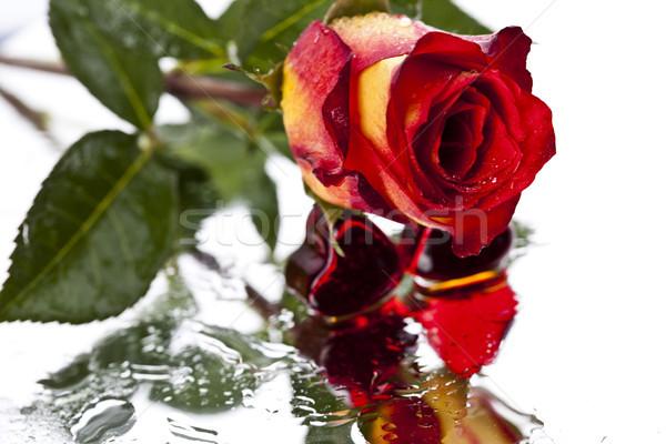 Love, Valentine, Heart, romantic bright tone theme Stock photo © JanPietruszka