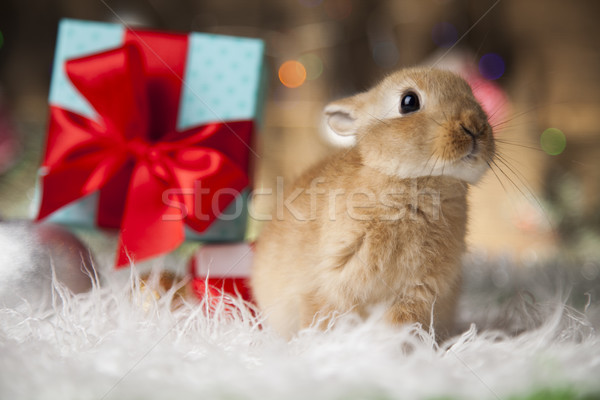Little bunny,Funny rabbit on Christmas background Stock photo © JanPietruszka