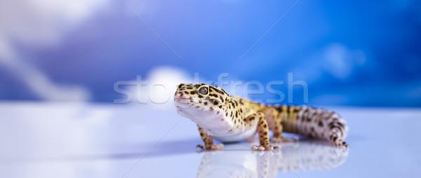 Gekko blauwe hemel oog witte dier hagedis Stockfoto © JanPietruszka