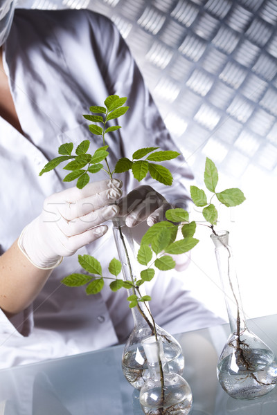Química equipamento plantas laboratório experimental médico Foto stock © JanPietruszka