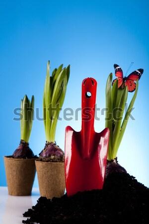 Foto stock: Jardim · planta · brilhante · primavera · flor