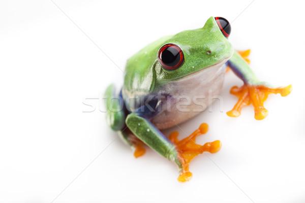 Red eyed tree frog, funny bright tone concept Stock photo © JanPietruszka