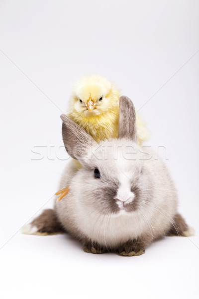куриного Bunny Пасху трава смешные животного Сток-фото © JanPietruszka