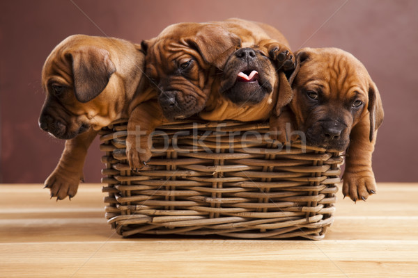 щенки плетеный корзины мало собака ребенка Сток-фото © JanPietruszka