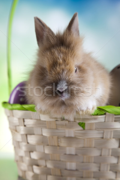 Rabbit in basket with Easter Stock photo © JanPietruszka