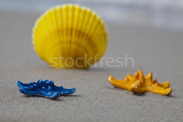 Belle mer shell lumineuses coloré plage Photo stock © JanPietruszka