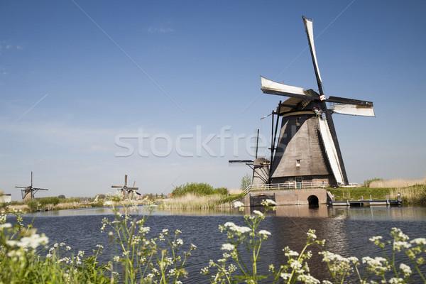 Moinho de vento Holanda holandês céu grama verão Foto stock © JanPietruszka