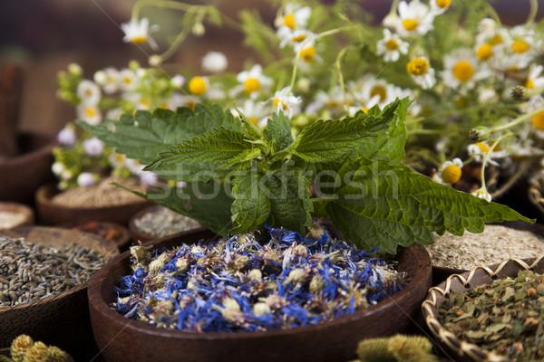 травы медицина Vintage природного медицинской Сток-фото © JanPietruszka