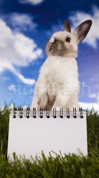 Copyspace blank paper and bunny Stock photo © JanPietruszka