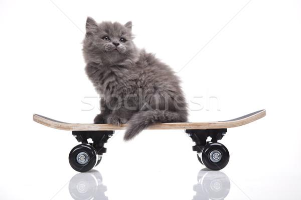 Stok fotoğraf: Kaykay · küçük · gri · kedi · yavrusu · sevimli · evcil · hayvan