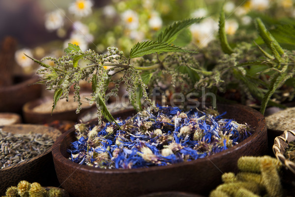 Hierbas medicina vintage naturales médicos Foto stock © JanPietruszka