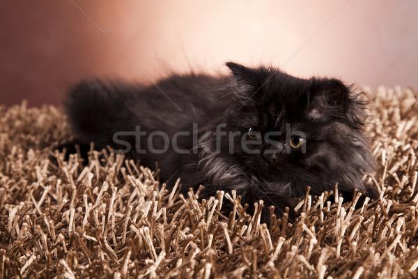 Kitty drôle chaton oeil chats animaux Photo stock © JanPietruszka