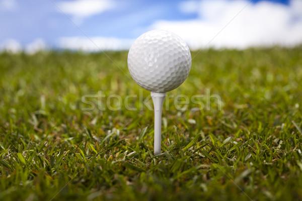 Golf ball on green meadow Stock photo © JanPietruszka