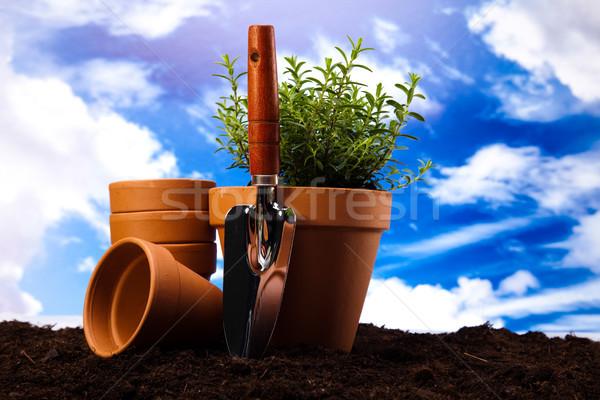 Set of garden tools, vivid bright springtime concept Stock photo © JanPietruszka