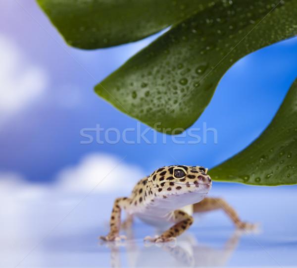Gekkó hüllő gyík szem zöld fehér Stock fotó © JanPietruszka