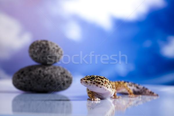 Geco ojo blanco animales lagarto leopardo Foto stock © JanPietruszka