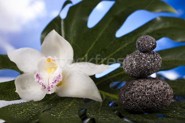 Orchid flower, Zen stones Stock photo © JanPietruszka